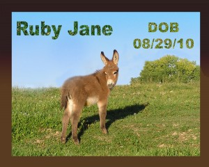 Annie's Acres Ruby Jane