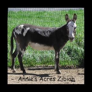 Annie's Acres Zibiah