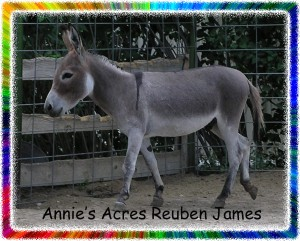 Annie's Acres Reuben James