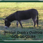 Hidden Creek's Ovaltine
