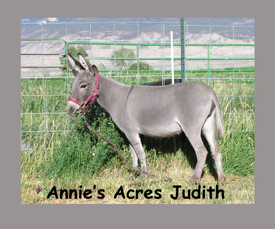 Annie's Acres Judith