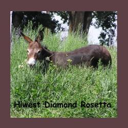 Hiwest Diamond Rosetta