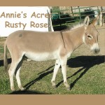 Annie's Acres Rusty Rose